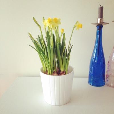 my table top garden
