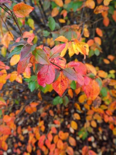 autumn color scheme