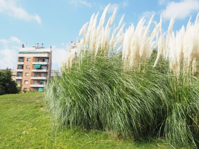 a block and high grass