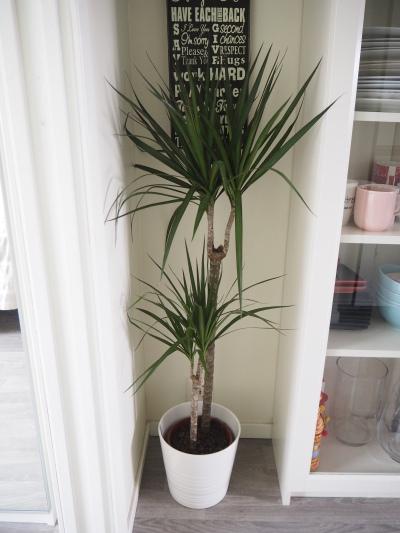 a palm tree corner