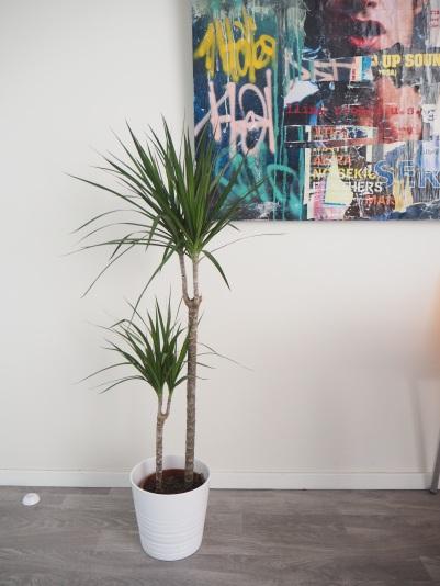 a palm tree moment