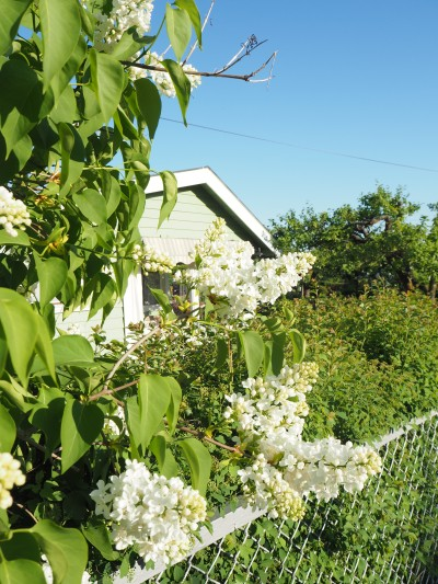 spring bushes