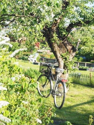 summer is for biking