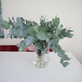 trendy eucalyptus