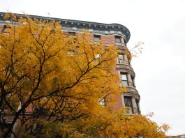 fall in Harlem
